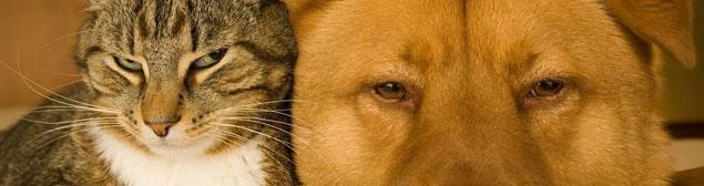 animaux-et-aloe-vera.jpg