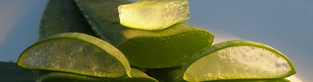 application-externe-aloe-vera.jpg